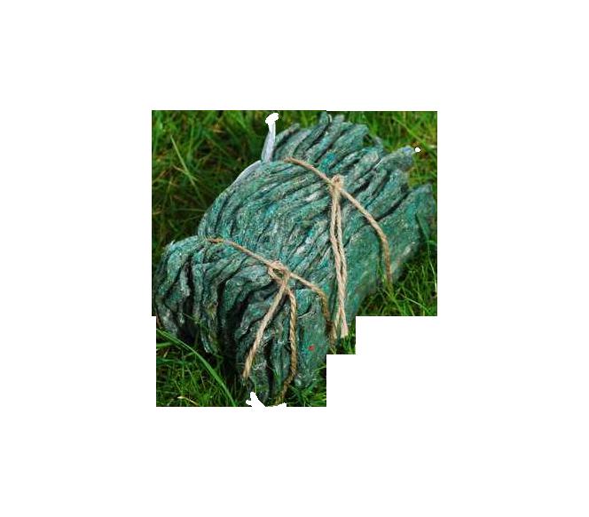 typhlodromus-pyri