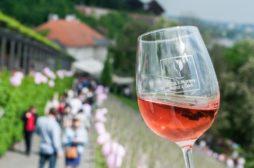 svatek ruzových vin